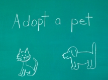 pet adoption alerts